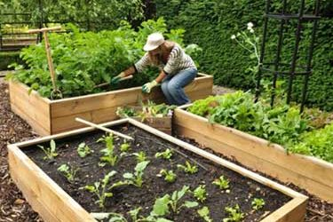 Best Tools for Allotment